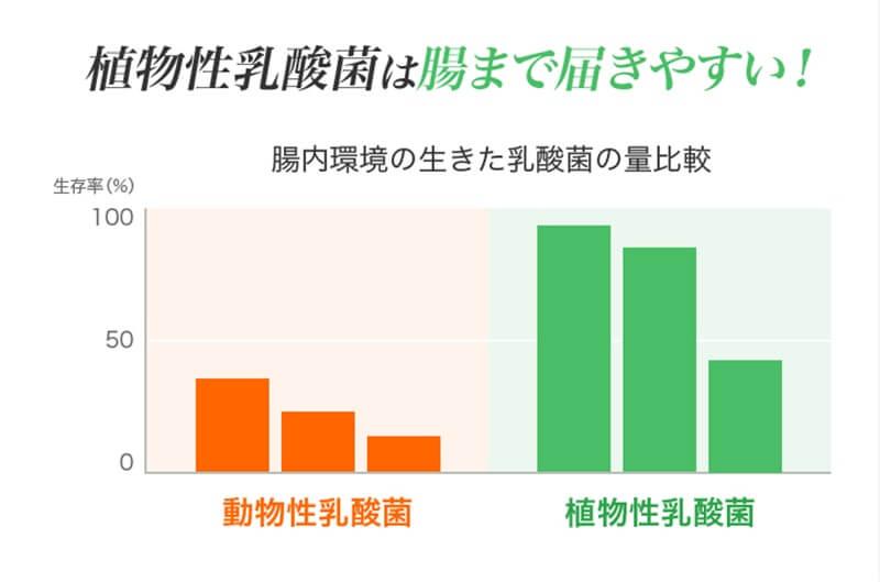 植物性乳酸菌と動物性乳酸菌の比較データ